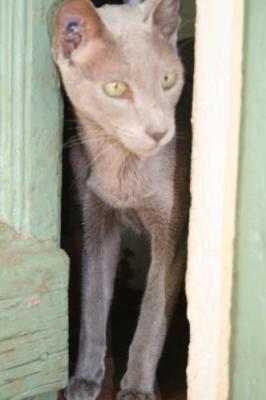 Il gatto di Joann Sfar dal profilo di Facebook
